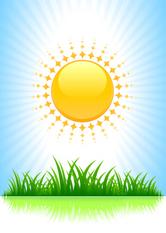 sun_grass 2