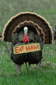 Eat_Ham_Turkey