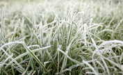 frozen_grass 3