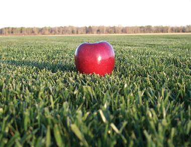 apple on grass 3
