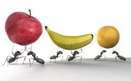 ants raiding picnic