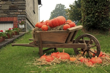 pumpkins wheelbarrow