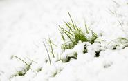 snowy grass 3