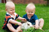 babies_bunny